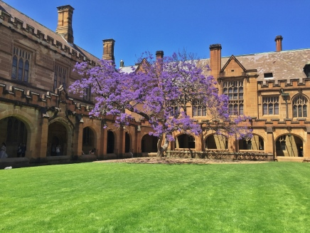 Swarthmore isn't the only school with a purple tree!